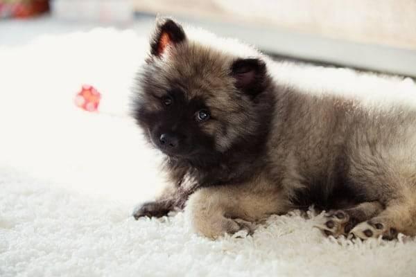 puppy-5