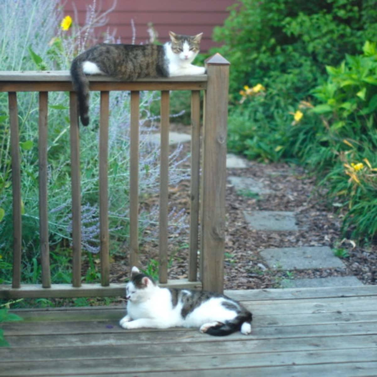 Two cats resting near a fence post.