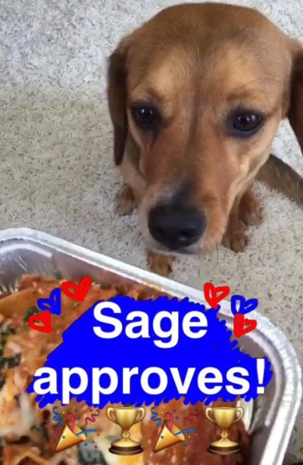 Sage checking out lasagna on SnapChat